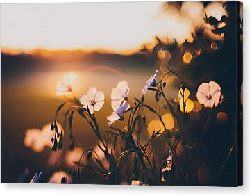 Garden Flowers Canvas Print - In The Garden by Tracy  Jade