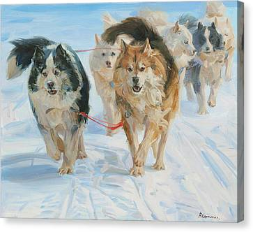 Husky Canvas Print - In The Harness by Victoria Kharchenko