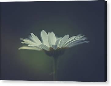 Canvas Print featuring the photograph In The Light by Shane Holsclaw