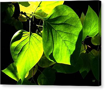 In The Limelight Canvas Print by Will Borden