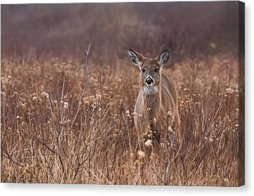 Canvas Print featuring the photograph In The Meadow by Robin-Lee Vieira