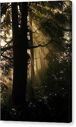 In The Mist Of Dreams Canvas Print by Jeff Swan