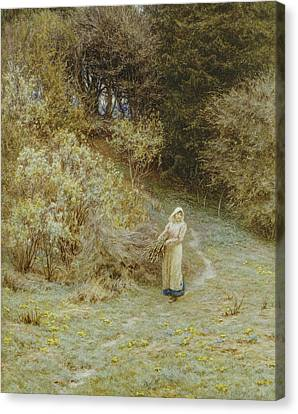 In The Primrose Wood Canvas Print by Helen Allingham
