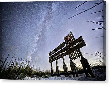 In The Sea Oats Of Fort Pickens Canvas Print by JC Findley