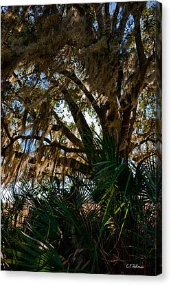 In The Shade Of A Florida Oak Canvas Print by Christopher Holmes