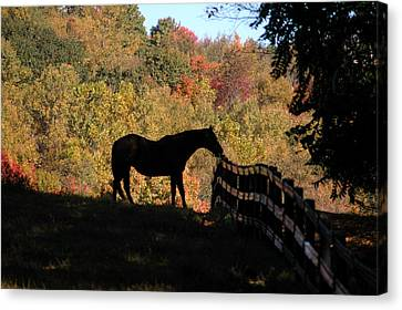 In The Shadow Canvas Print by William A Lopez