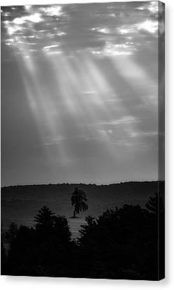 Canvas Print featuring the photograph In The Spotlight by Bill Wakeley