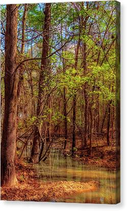 In The Swamp Canvas Print