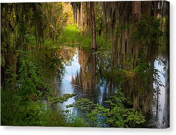 In The Swamp Canvas Print by Carolyn Dalessandro