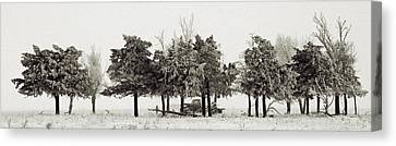 In The Tree Line Canvas Print by Don Durfee