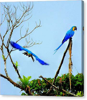 In The Wild Canvas Print by Karen Wiles