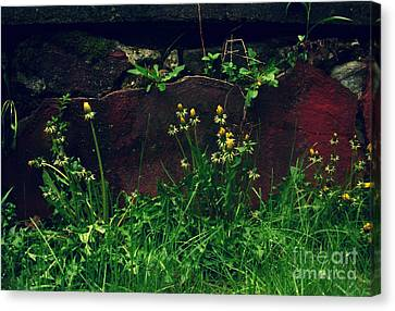 Canvas Print featuring the photograph In The Wild by Kristine Nora