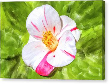 Canvas Print featuring the mixed media In The Winter Garden - Camellia Blossom by Mark Tisdale