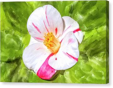 In The Winter Garden - Camellia Blossom Canvas Print