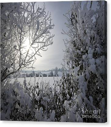 In The Winter Time Canvas Print by Angel  Tarantella