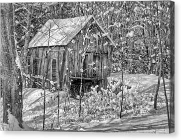 In The Woods Bw Canvas Print