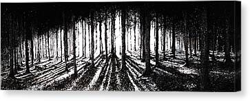 In The Woods 2 Canvas Print