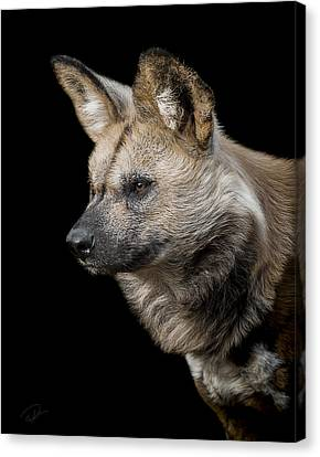 Wild Dogs Canvas Print - In To The Distance by Paul Neville