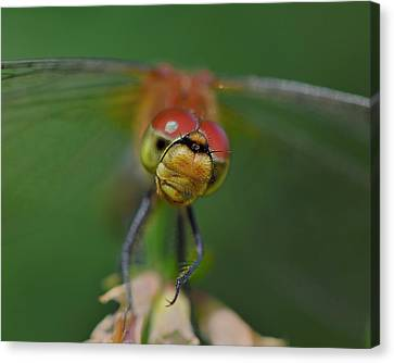 In Your Face Canvas Print