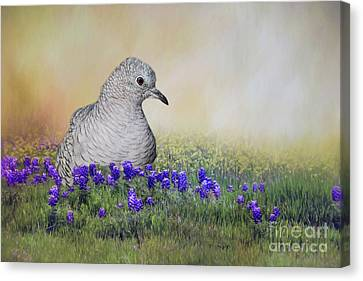 Canvas Print featuring the photograph Inca Dove  by Bonnie Barry