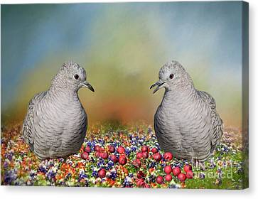 Inca Doves Canvas Print by Bonnie Barry