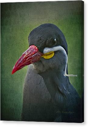 Inca Tern _ 1a Canvas Print