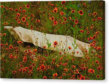 Indian Blanket Covered Rock Canvas Print by Dennis Nelson