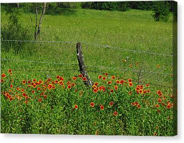 Indian Blanket Fence Canvas Print by Robyn Stacey