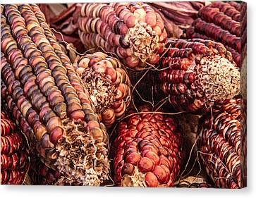 Canvas Print - Indian Corn by Bill Gallagher