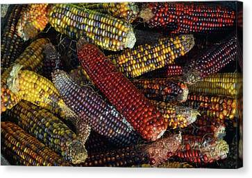 Indian Corn Canvas Print by Joanne Coyle