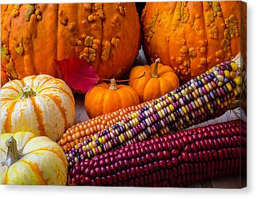 Red Leaf Canvas Print - Indian Corn With Knucklehead Pumpkins by Garry Gay