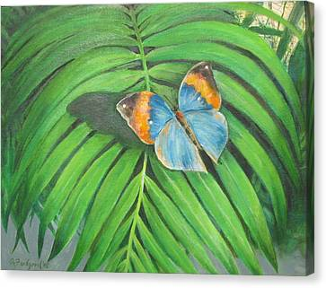 Indian Head Butterfly Canvas Print by Oz Freedgood