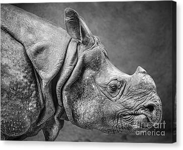 Indian Rhino Profile Canvas Print by Jamie Pham
