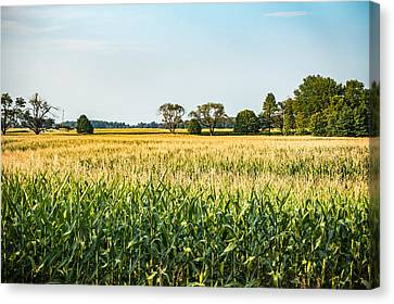 Indiana Corn Field Canvas Print