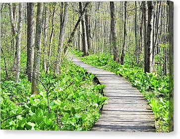 Indiana Dunes Great Green Marsh Boardwalk Canvas Print