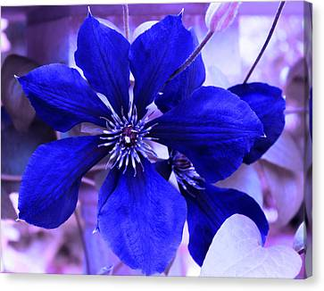 Indigo Flower Canvas Print by Milena Ilieva
