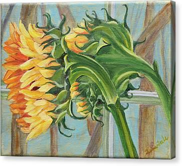 Indoor Sunflowers Canvas Print by Trina Teele