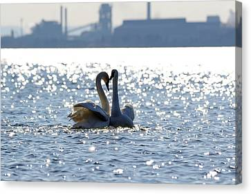 Industrial Swans Canvas Print