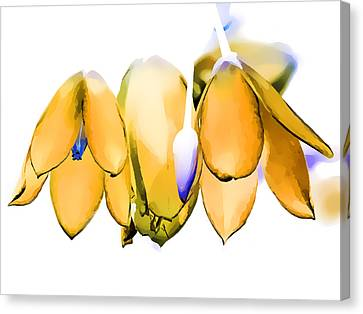 Digital Canvas Print - Inflorescence I by Gareth Davies