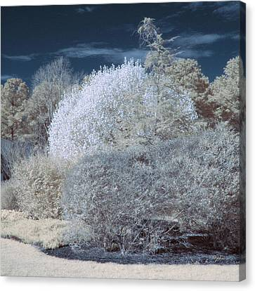 Counry Canvas Print - Infrared Bushes by Paulette B Wright