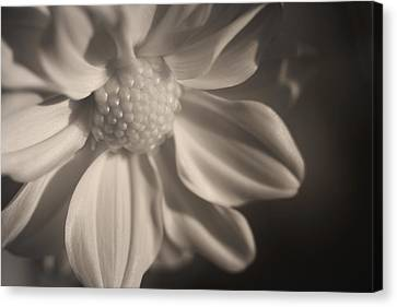 Infrared Mum Canvas Print
