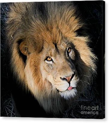 Ingozi Canvas Print by Laurie Chrisco