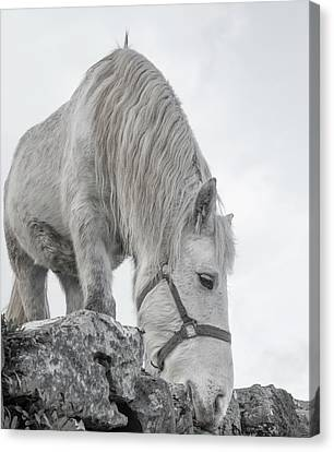 Inis Mor Tranquil Moments Canvas Print by Betsy Knapp