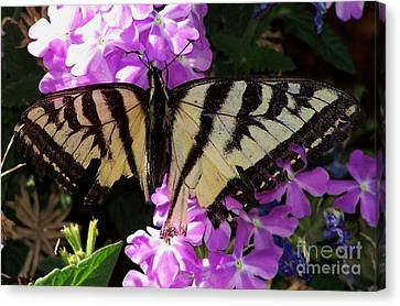 Canvas Print featuring the photograph Injured Swallowtail by Erica Hanel