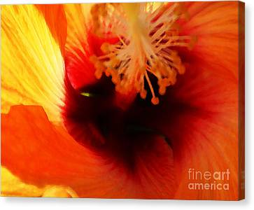 Inner Beauty Canvas Print by Linda Shafer