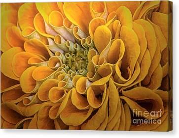 Inner Beauty Canvas Print by Mary Lou Chmura