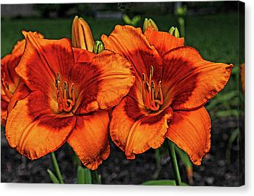 Canvas Print featuring the photograph Innocent Fire by Judy Vincent