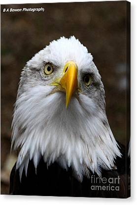 Inquisitive Eagle Canvas Print