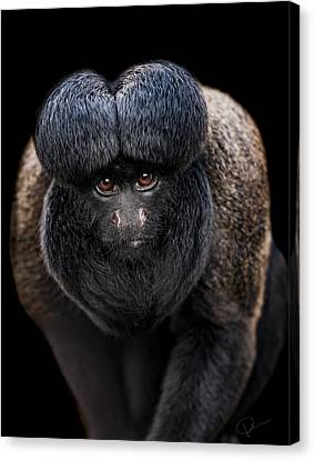 Inquisitive  Canvas Print by Paul Neville