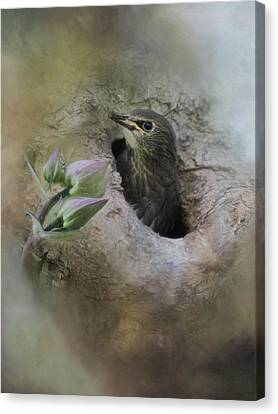 Inquisitive Canvas Print by Robin-Lee Vieira